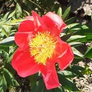 Ольга Миско - Слоним, Гродненская обл., Беларусь, 46 лет на Мой Мир@Mail.ru