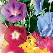 Семена цветов и овощей group on My World